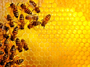 Honey bees Sweden --- Image by © Jonn/Johnér Images/Corbis